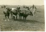 H.C. Morrison at Asbury College Farm (on cart - zoomed in)